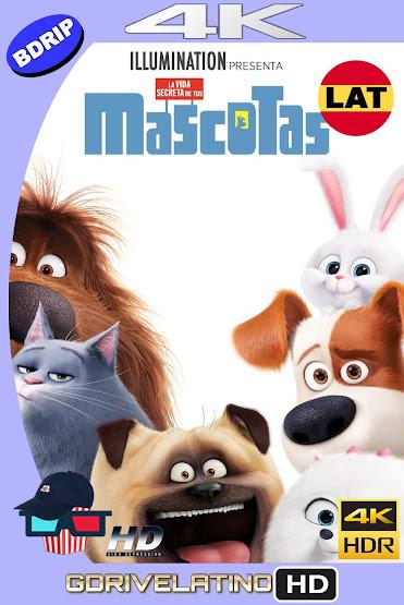 La Vida Secreta de tus Mascotas (2016) BDRip 4K HDR Latino-Ingles MKV