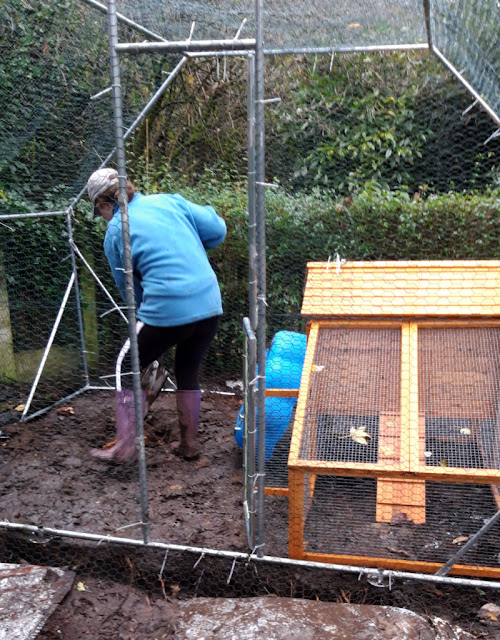 Big daughter is inside the duck enclosure digging the hole for the pool.  The duck house is to the right