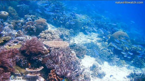 Marine life in mioskon island of raja ampat
