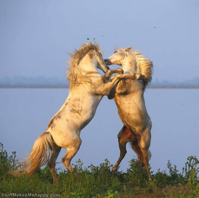 Incredible Wild Animals Pictures by wildlife photographer Andrey Gudkov