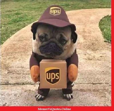 Cute Puppy Memes