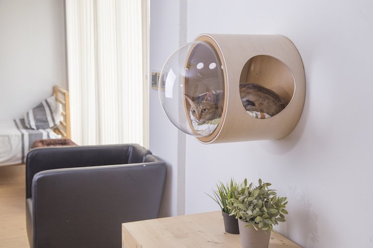 These Bizarre Cat Beds Look Like Spaceships