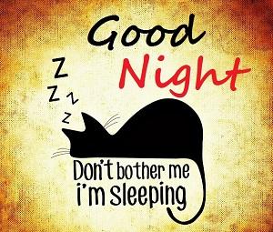 good night cat pic