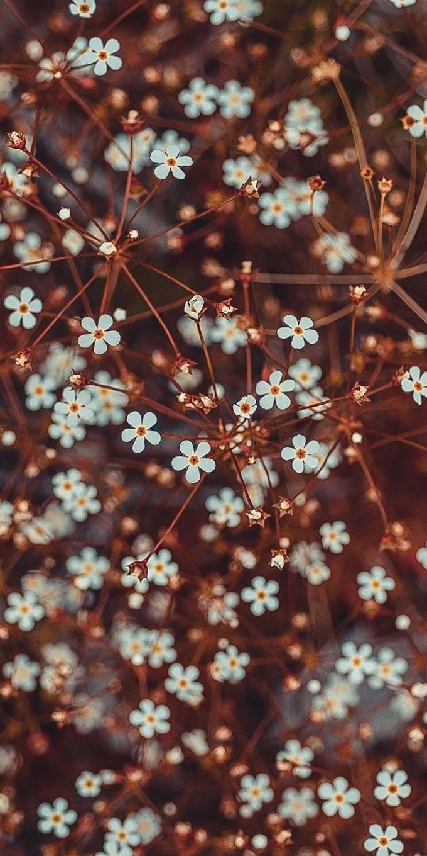 Lindas Flores Brancas, Primavera, Natureza