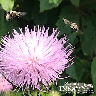 Weekly Digest #31   Week Ending August 28, 2021   Nature's INKspirations by Angie McKenzie