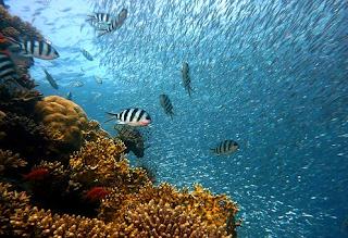 Negara Maritim Terbesar Di Dunia (Indonesia)