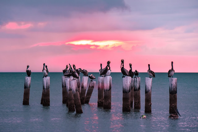 Sunset Old Pilings Naples, Florida