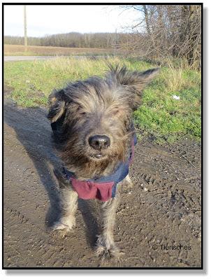 Hundeblog, Dogblog, mit Hund unterwegs