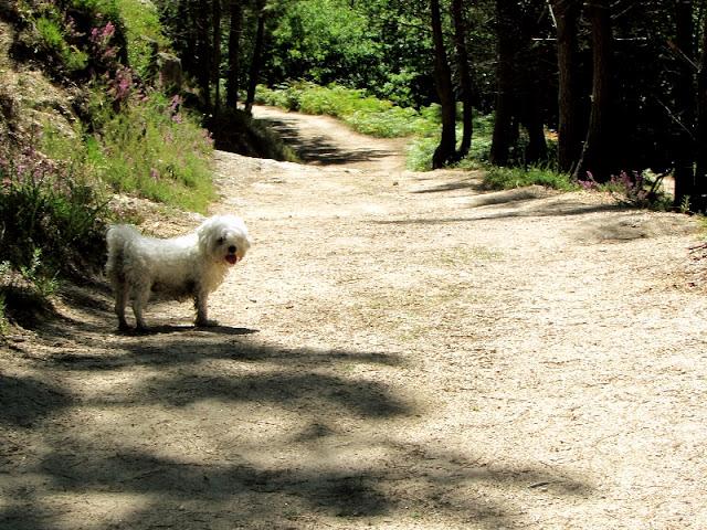 cão num caminho de terra