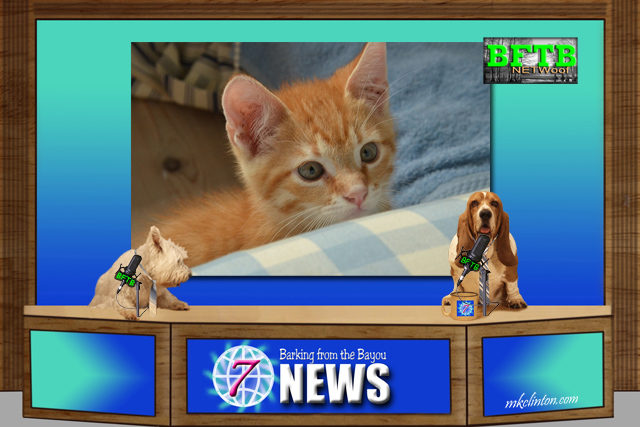 BFTB NETWoof News report on a dog nursing a kitten