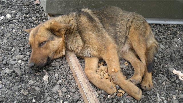 Бездомные псы отгоняли его от еды и не давали укрыться от непогоды