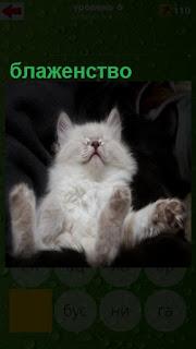 кошка развалилась в кресле и блаженствует раскинув лапы в стороны
