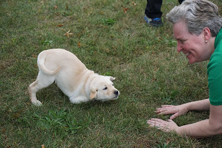A yellow Labrador retriever puppy does a play bow in the grass in front of a woman on her hands and knees.