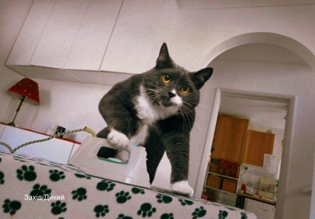 Обовязки кота.