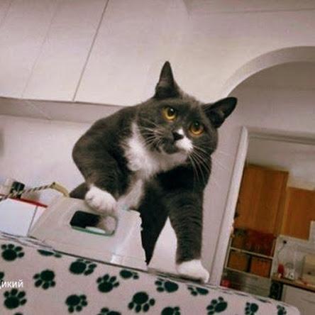Обов'язки домашнього кота