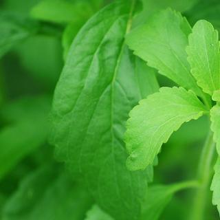 Stevia adoçante