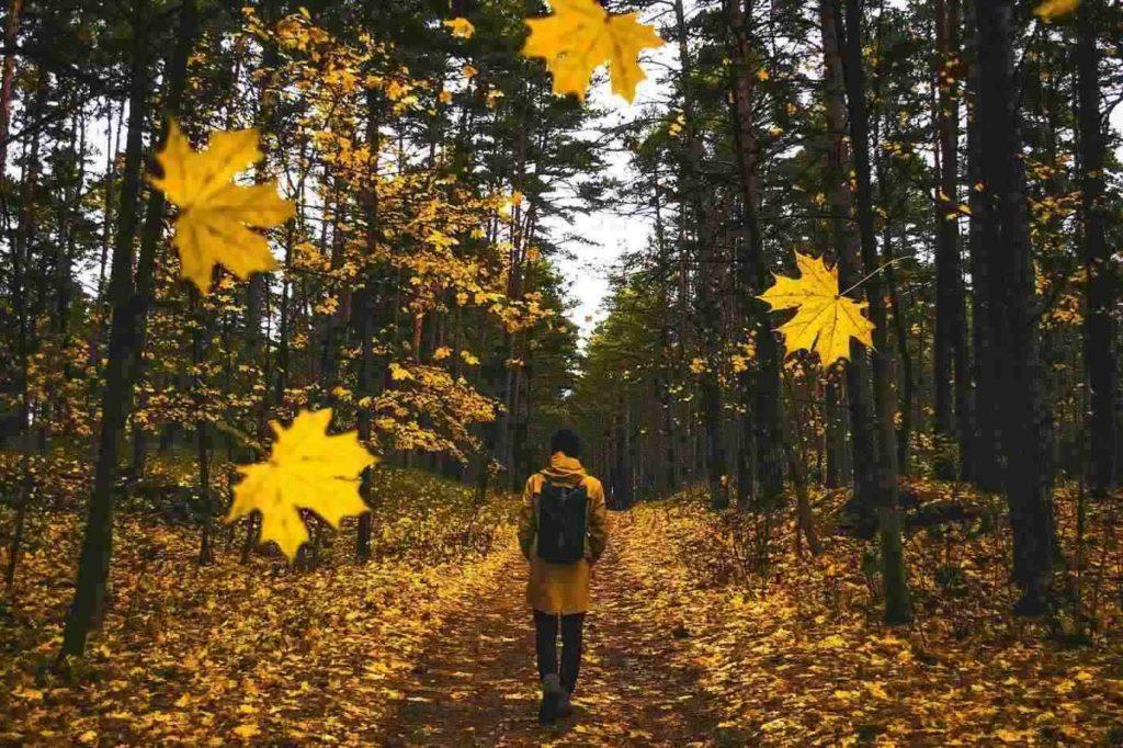 Granite Hills Trail -- Fall