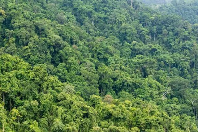 DroneDeploy Technology की मदद से पेड़ लगाएगी Los Angles की कंपनी EDEN