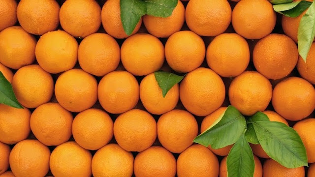 Όμιλος που δραστηριοποιείται σε Σπάρτη και Αργολίδα δημιουργεί πορτοκαλεώνα στην Αίγυπτο