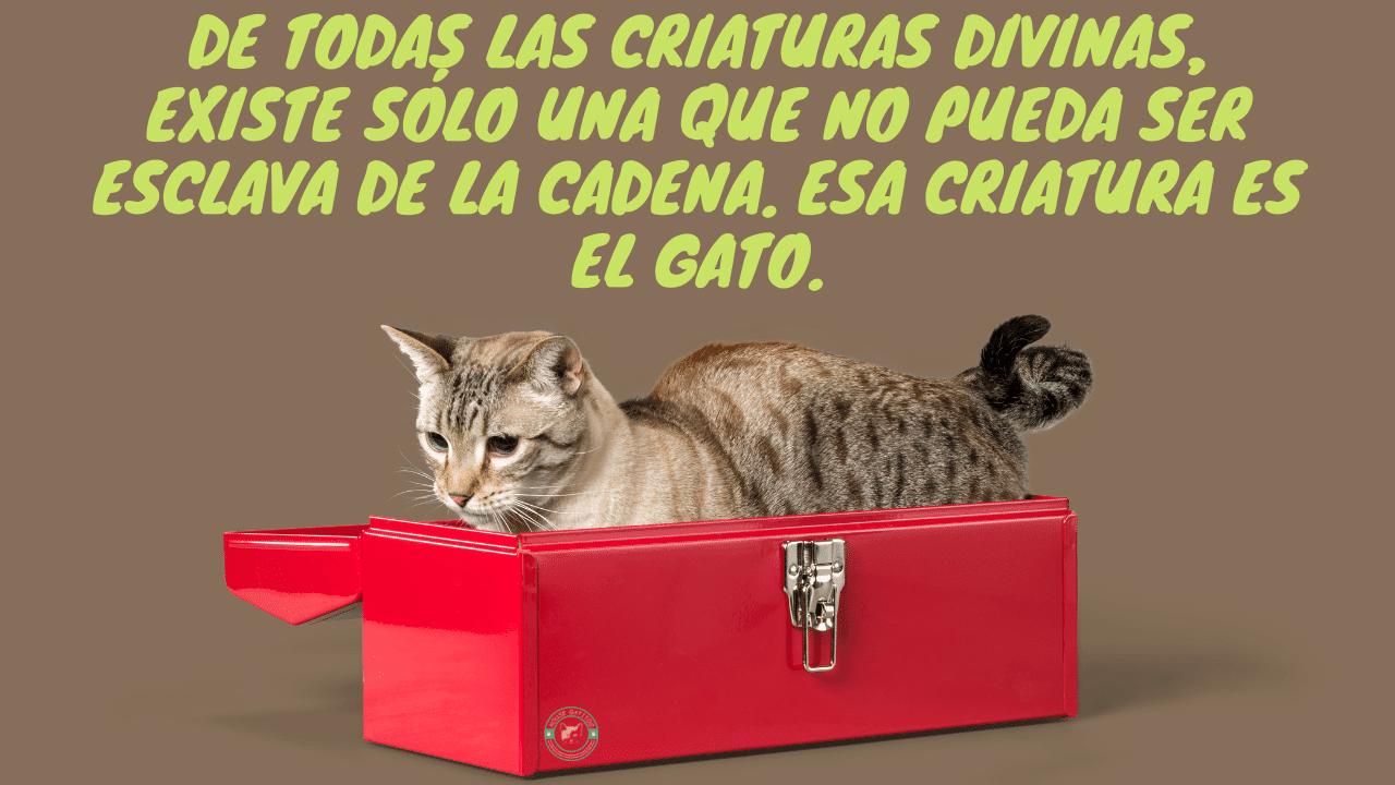 Frases de gatos para redes sociales