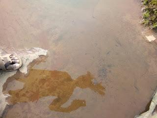 निर्झर सौन्दर्य का प्रतिक बिजाकसा बस्तर  की गहराईयों में छुपी एक अनूठा जलप्रपात