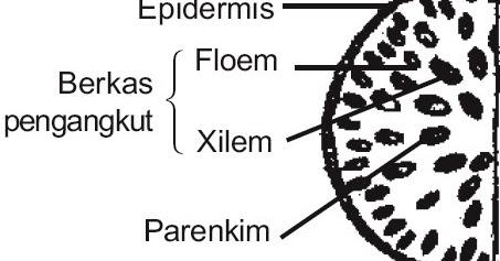 Perbedaan Tumbuhan Dikotil Dan Monokotil Berdasarkan Struktur Jaringan Penyusunnya