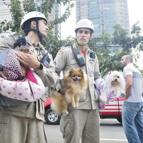 """►resgatados animais de estimação, por corpo de bombeiros,em Vitória/ ES, após desabamento em condomínio de luxo  """"Grand Parc Residencial Resort""""...""""Cães e gatos foram entregues aos donos. """""""