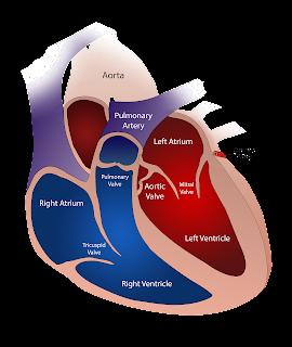 heart valves textile sphere