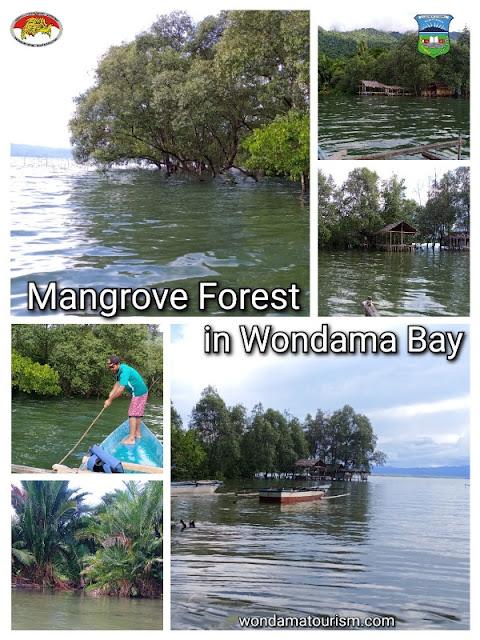 A visit to Mangrove and Sago forest of Wondama regency