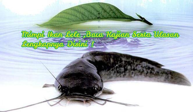 Arti mimpi mancing ikan lele dalam togel