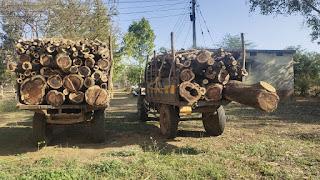 वनोपज जांच नाका खैरी महाराष्ट्र और एमपी के बॉर्डर में दो ट्रैक्टर बबूल की लकड़ी सहित किये गये जब्त