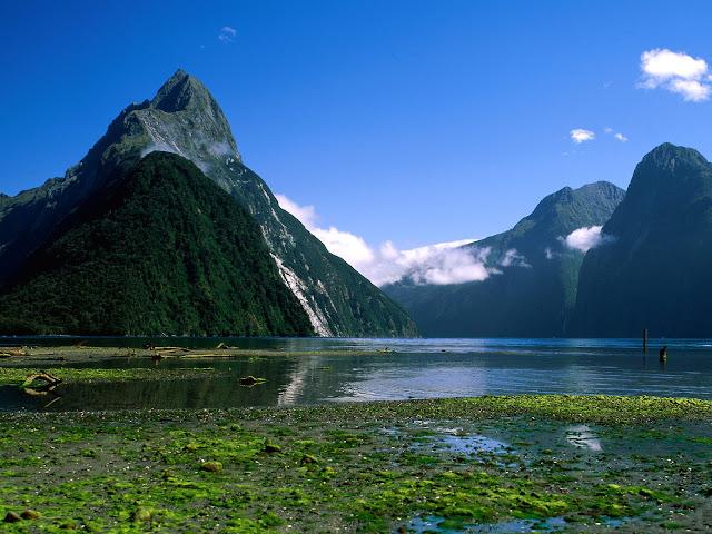Nueva Zelanda Hd: Las Aves Rapaces: Las Aves Rapaces De Nueva Zelanda