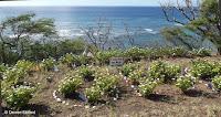 One World, One People - Diamond Head mini garden, Oahu, HI
