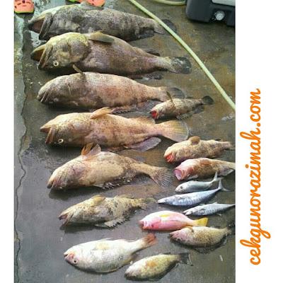 suami kaki pancing, pancing laut dalam, jigging, team jigging selangor, ikan kerapu