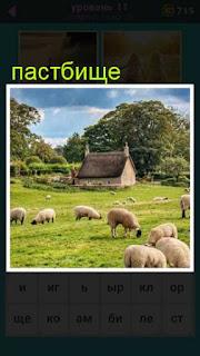 на пастбище в поле пасутся отара овец на фоне домов 667 слов 11 уровень
