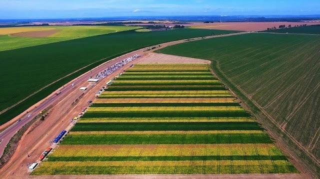 AgroBrasília: Dia de campo mostra prévia da Competição de Cultivares