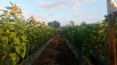 Agro wisata Kebun Al Quran Kaliploso