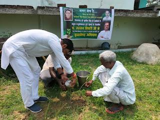 वृक्षारोपण अभियान के 29 वें दिन मोहनभिठ्ठी मे किया गया वृक्षारोपण | #NayaSaberaNetwork