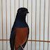 人気の完全なイメージと彼の名前のさえずり鳥の29種類