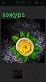Свернутая в кружок кожура оформлена зеленью лежит на поверхности земли