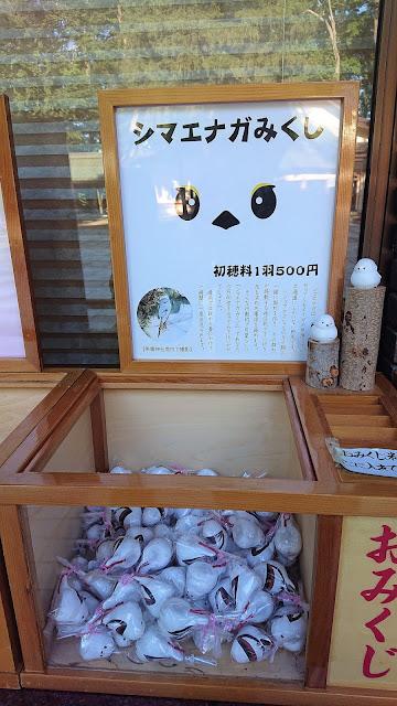 北海道 十勝 帯廣神社 シマエナガみくじ