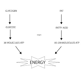 Energy requirement for Exercise:101