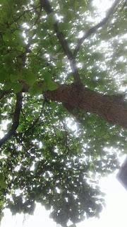 Blick in die Baumkrone