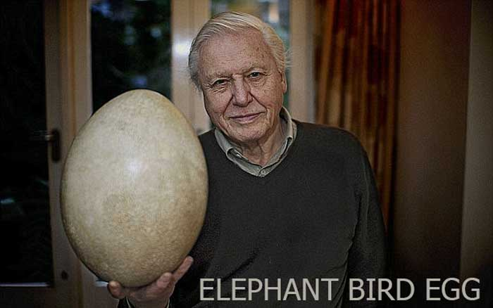 World's largest and bird eggs
