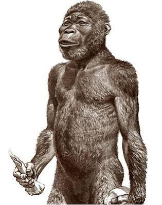 Australopithecus Africanus - pustakapengetahuan.com
