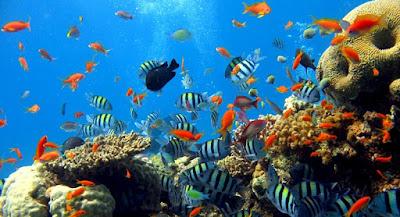 Simak Informasi Berikut Sebelum Mengunjungi Taman Laut Bunaken