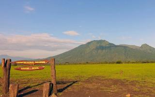 3 Alasan Taman Nasional Baluran Banyuwangi Wajib Anda Kunjungi