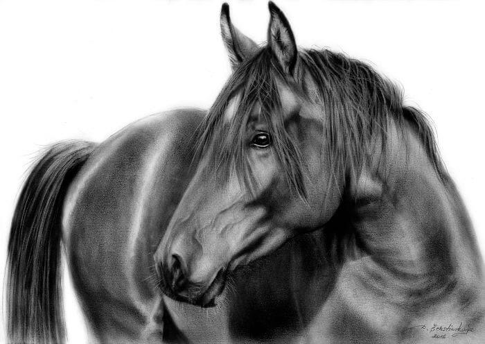 09-Black-Stallion-Horse-Danguole-Serstinskaja-Animal-Dry-Brush-Technique-Paintings-www-designstack-co