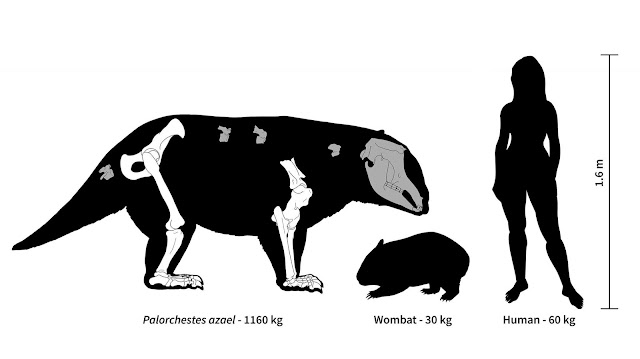 Ancient Australia was home to strange marsupial giants, some weighing over 1,000 kg