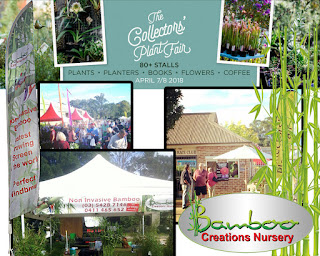 Bamboo Creations Victoria are attending the Hawkesbury collectors plant fair.